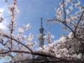 [2012桜][スカイツリー]