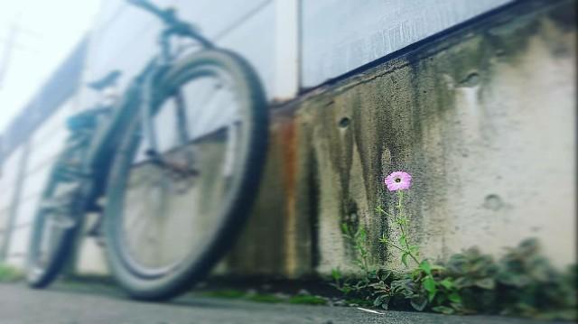 f:id:oyajicyclist:20200704180509j:image