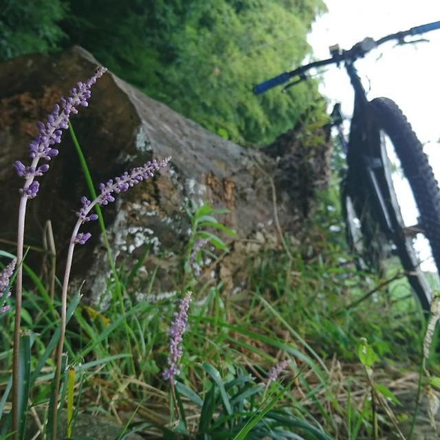 f:id:oyajicyclist:20200723171657j:image
