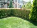 生け垣刈込、芝はボウボウ