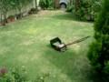 6月25日 刈り高20mm (芝刈り調整1か月後)