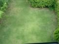 7月31日 刈り高20mm