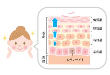 f:id:oyakudachinomori:20170512104519j:plain