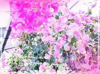 f:id:oyamadoka:20190729015552j:image
