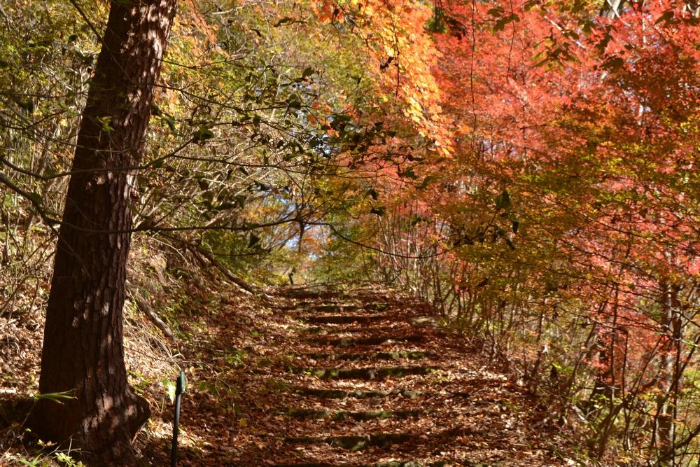西の郷遊歩道の紅葉