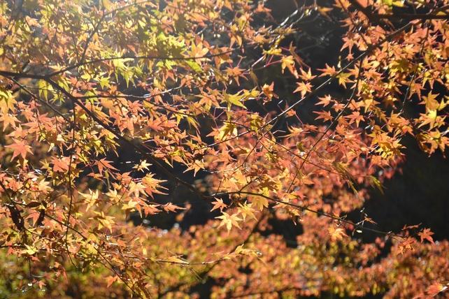 赤水の滝公園の紅葉がきれい!