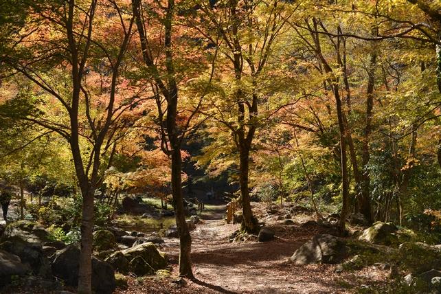 きれいに染まる赤水の滝公園の紅葉