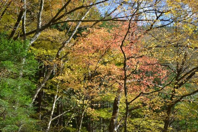 三段の滝周辺の紅葉