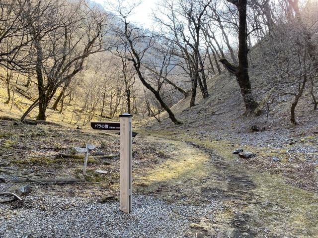 安倍峠の登山道