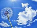 [空][雲][color 青][綿毛][タンポポの綿毛]