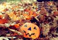 [ハロウィン][カボチャ][秋][season ハロウィン][season 秋][color オレンジ] ハロウィン