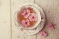 [桜][桜 ティー][ティー][花][ティー 桜][color ピンク][style かわいい][style 花] 桜ティー
