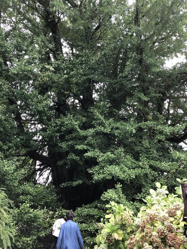 f:id:oyasumiameko:20180911234852j:plain