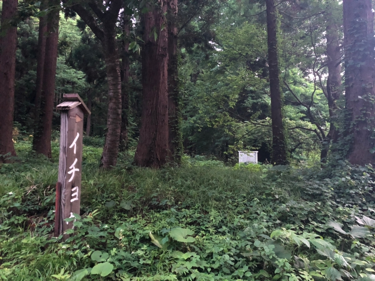f:id:oyasumiameko:20190711203750j:plain