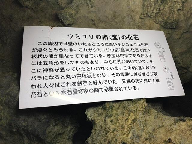 f:id:oyasumiameko:20191115204542j:plain