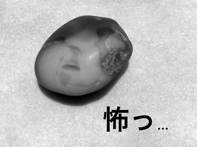 f:id:oyasumiameko:20191222212722j:plain