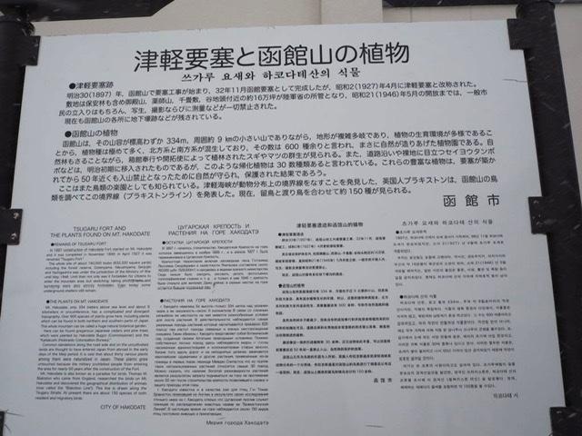 f:id:oyasumiameko:20200209230243j:plain