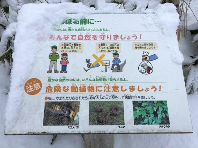 f:id:oyasumiameko:20200209231803j:plain