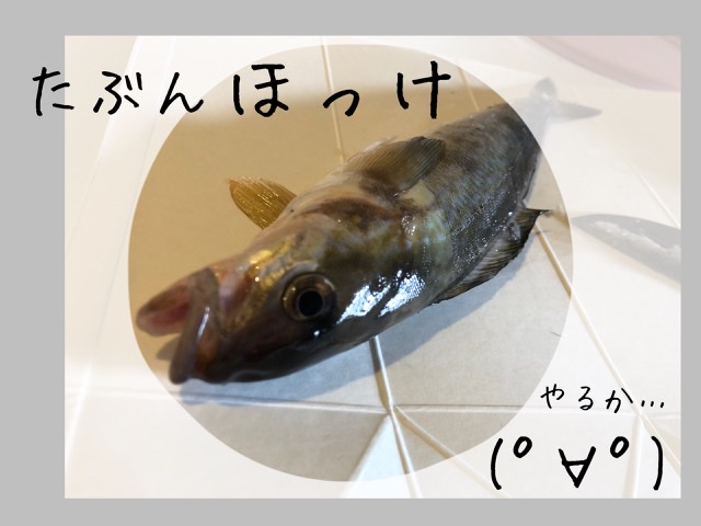 f:id:oyasumiameko:20200505115921j:plain