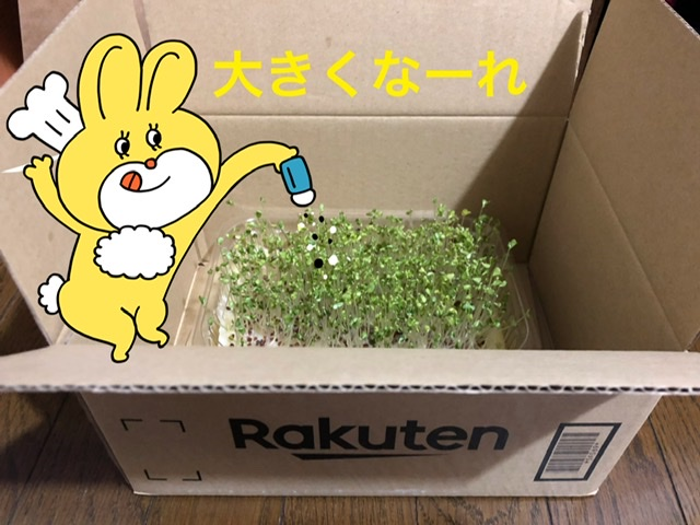 f:id:oyasumiameko:20200612200436j:plain