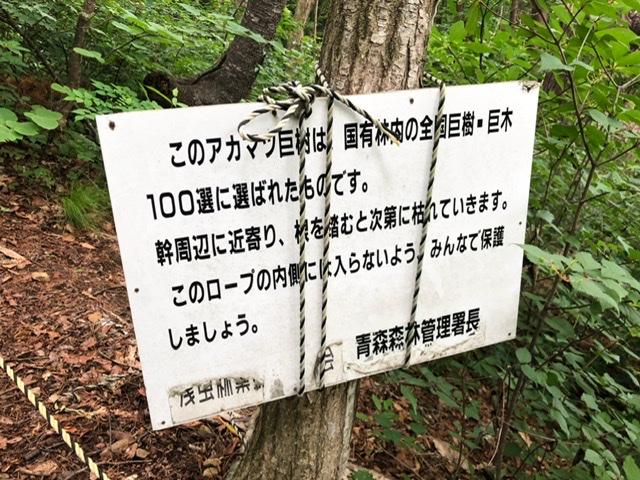f:id:oyasumiameko:20200624213548j:plain