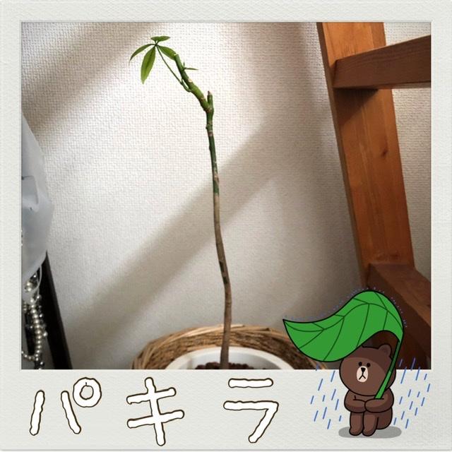f:id:oyasumiameko:20200805205014j:plain