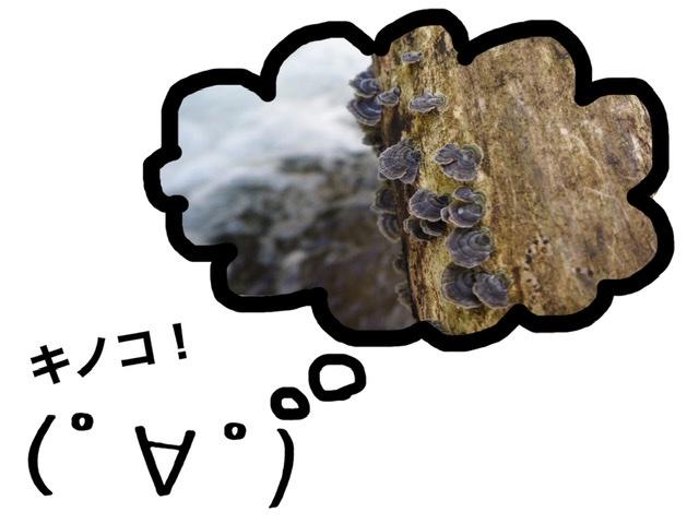 f:id:oyasumiameko:20201024205937j:plain