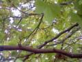 f:id:oyasumihitugi23:20111020164142j:image:medium