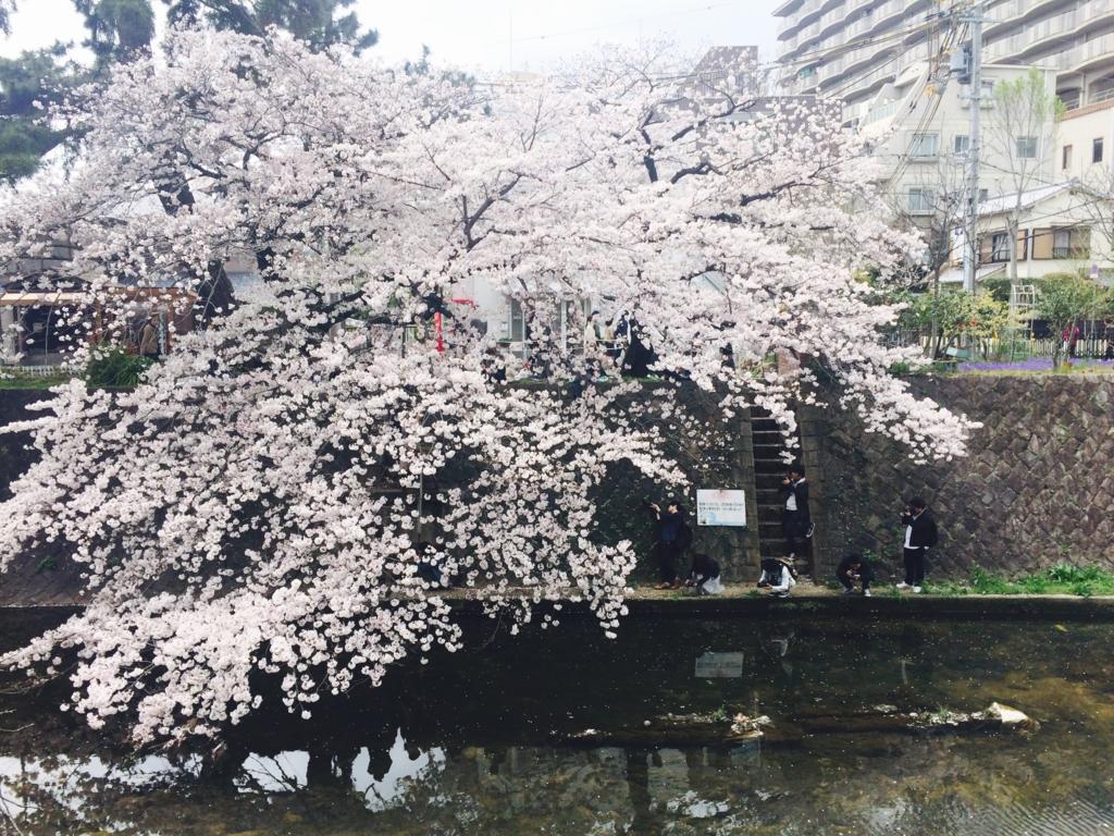 f:id:oyuki0916:20170410102644j:plain