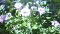 f:id:ozanari3:20120430124954j:image:medium