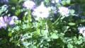 f:id:ozanari3:20120430124955j:image:medium