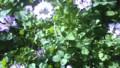 f:id:ozanari3:20120430124956j:image:medium