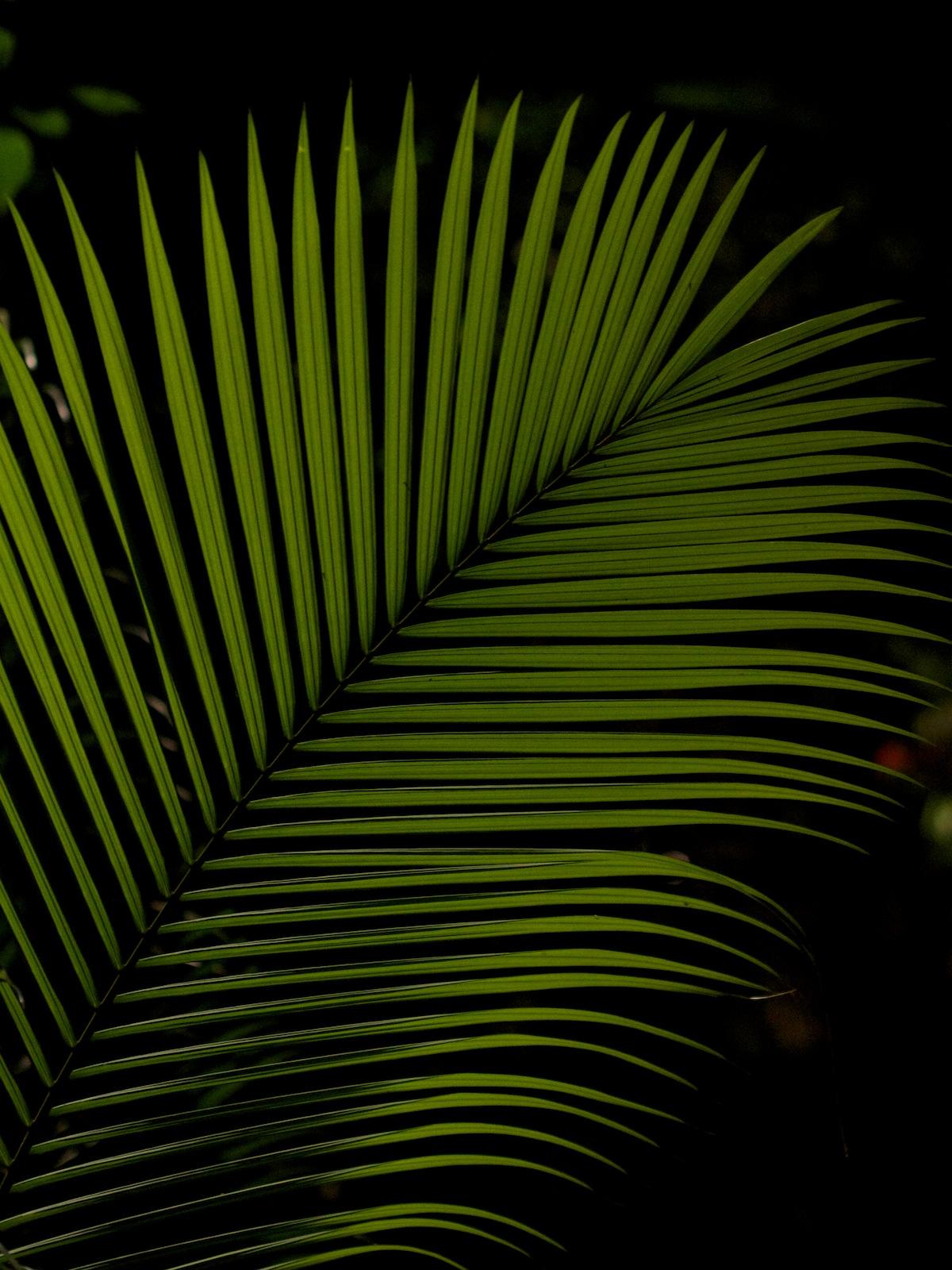 f:id:p0lar-star:20120528201950j:image