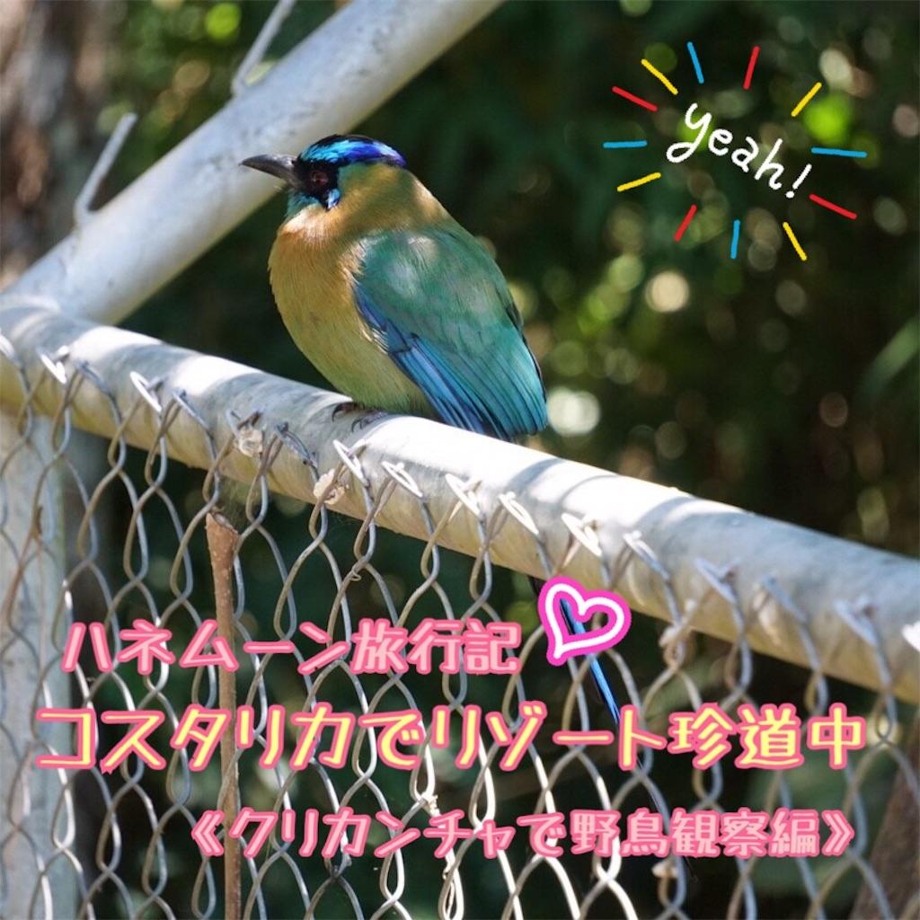 f:id:p_orepore:20190604192305j:image