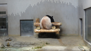 f:id:paffue:20120923221614j:image