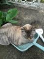 庭掃除を邪魔するモン太郎