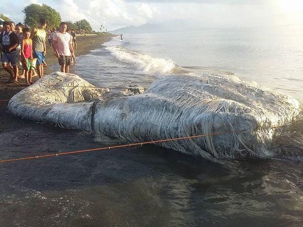 パラワン島謎の生物