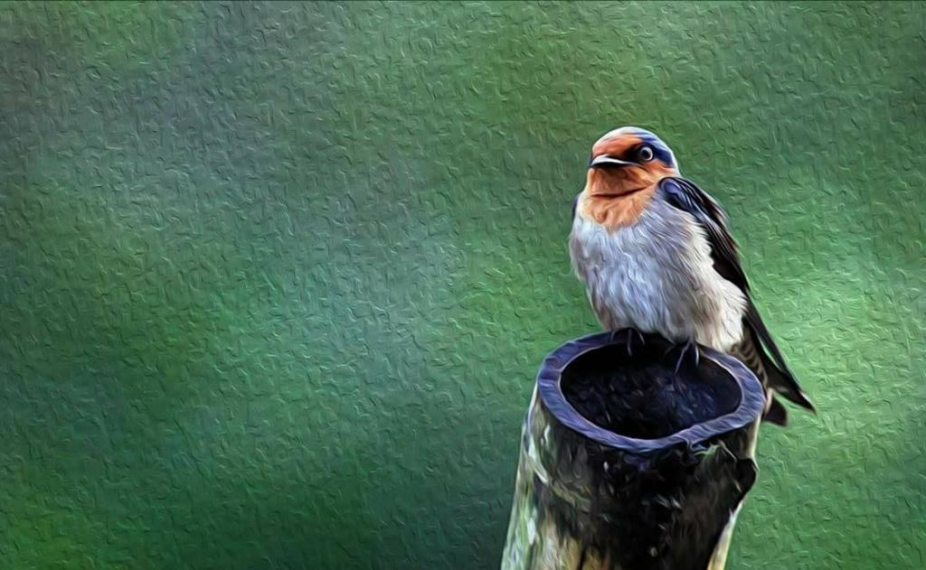 パラワン島野鳥