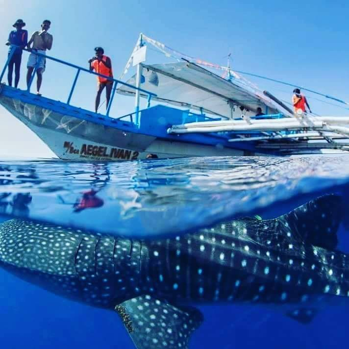 パラワン島ジンベイザメとシュノーケリングツアー