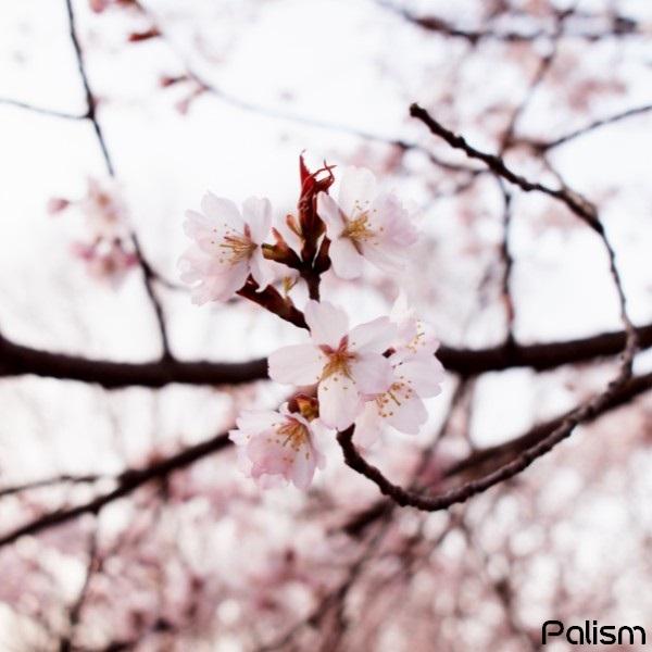 f:id:palism:20170502233254j:plain