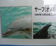 サーフ@下田海中水族館