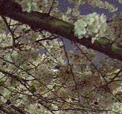 f:id:paluko:20090405235943j:image