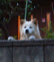 塀の上の犬