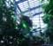 光が丘温室植物園