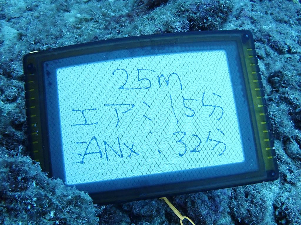 f:id:palwave_okinawa:20180730185031j:plain