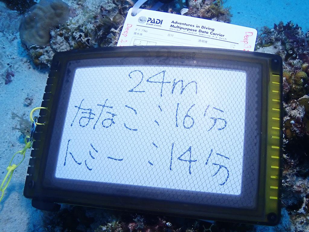 f:id:palwave_okinawa:20180824185027j:plain