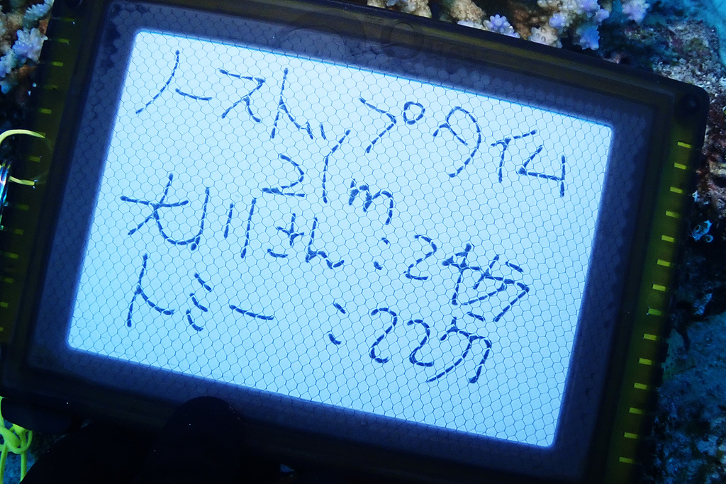 f:id:palwave_okinawa:20180911191251j:plain