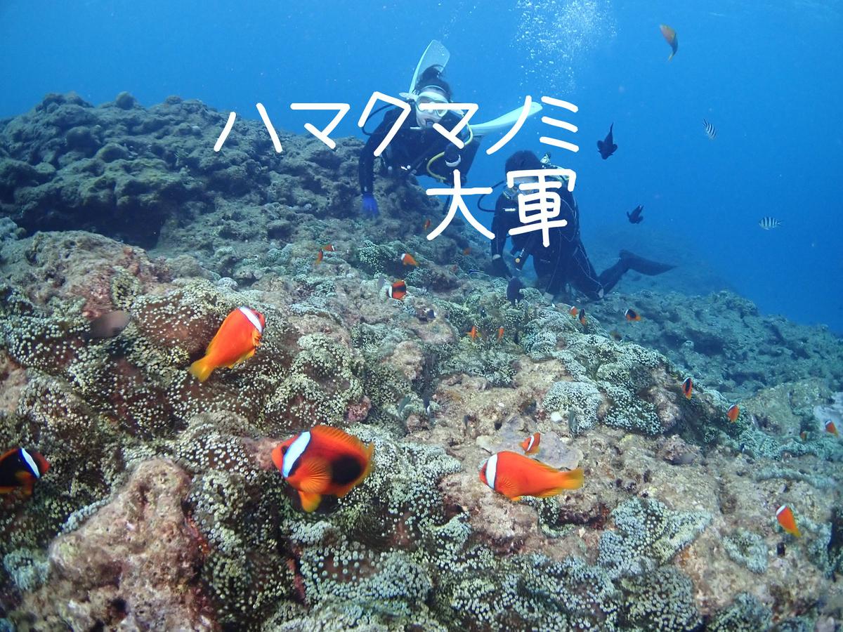 f:id:palwave_okinawa:20210305003158j:plain