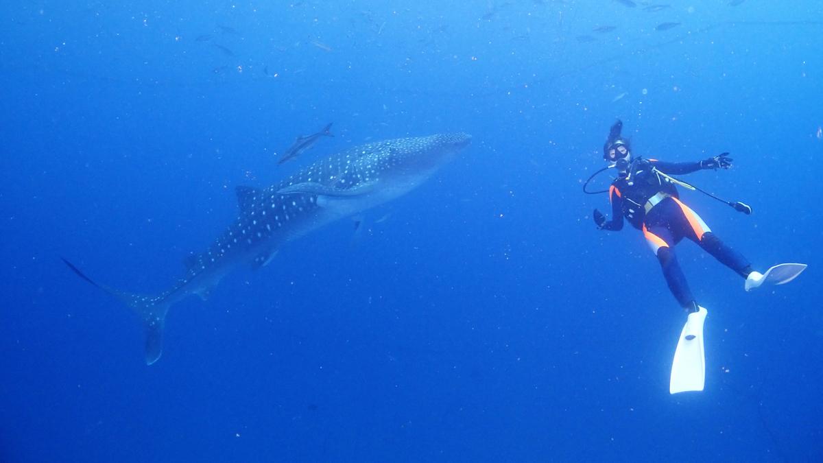 f:id:palwave_okinawa:20210817174527j:plain