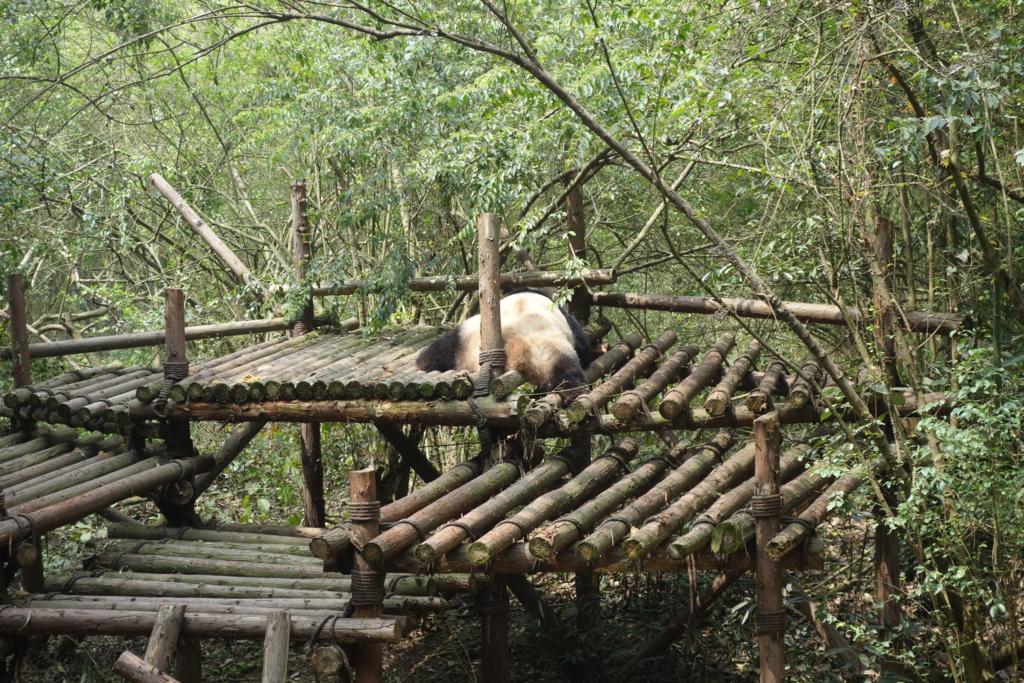 f:id:panda-25:20170410023026j:plain